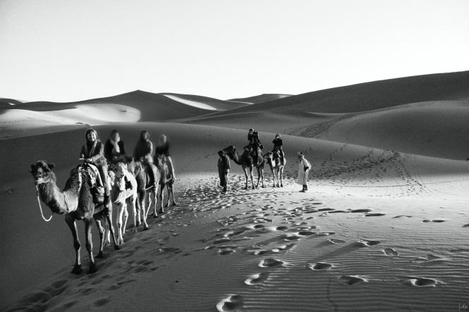 desierto en camello todas